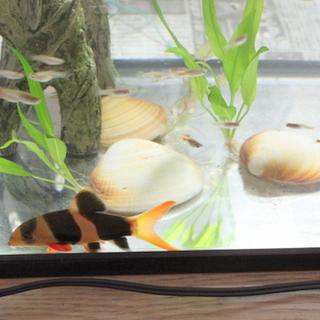 小型熱帯魚