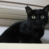 黒猫里親募集