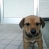 かわいい子犬です。