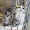 三毛とトラの子猫