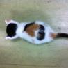 ハートマークの福猫