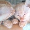 茶トラ子猫兄弟 サムネイル2