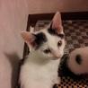 子猫2ヶ月・白黒猫・里親募集中~室蘭市
