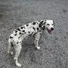 室内暮らしの家庭犬になりました! サムネイル6