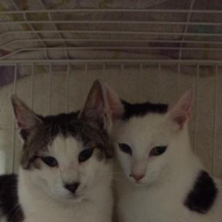 危険地域からのレスキュー成猫3匹を新しい家族に迎えてください!
