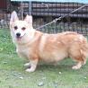 2歳♀繁殖引退犬