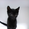 黒猫ちゃん(オス)ちょっとジジっぽい?