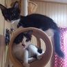 生後2ヶ月半の元気な子猫たちです。
