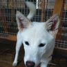 【里親様】白い雑種犬の女の子2匹【募集中】