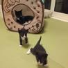 子猫3匹、オス