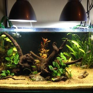 小型淡水魚30~35匹程度