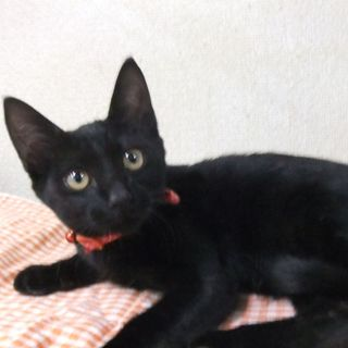(^0^)/黒ネコちゃんです、(^0^)/