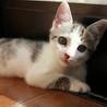 【一時募集停止】2ヶ月の女の子です。可愛がってください(*^^*)