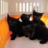 2ヶ月黒猫4匹★公園捨てられ緊急募集