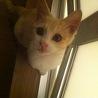 綺麗な茶白猫さん
