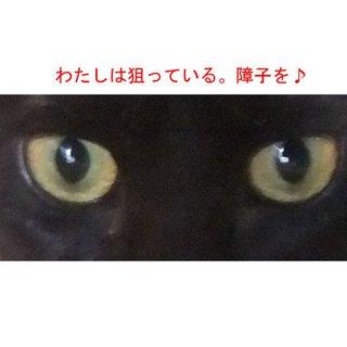 ◆◆とても懐こい黒猫ちゃん◆◆