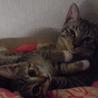 飼い主以外の人が来ると隠れてしまう超家弁慶猫です。