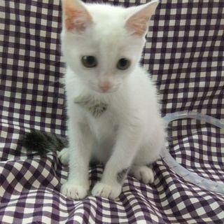 ♪♪小さい白ネコちゃんです♪♪