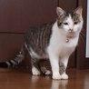 ゴロスリメス猫2匹里親さん探しています。