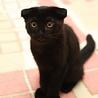 たれ耳の子猫