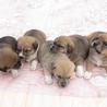 9つ子のうちの女の子5姉妹