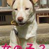 4か月の茶系子犬 サムネイル2