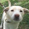 4か月の茶系子犬 サムネイル5