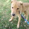 4か月の茶系子犬 サムネイル7
