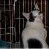 野良にゃんの産んだ可愛い猫