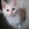 なめらかな毛並の白猫君をかわいがって下さる方