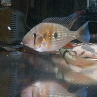 中型魚三匹。