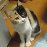 三毛猫ヴィーナス