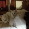 生後一ヶ月・子猫の里親さん募集です。
