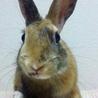 【トライアル決定】ミニウサギの男の子♪ サムネイル5