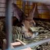 【トライアル決定】ミニウサギの男の子♪ サムネイル6
