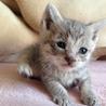 生後二週間の子猫貰って下さい!