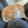 小さな子猫です