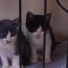 黒白子猫4兄弟