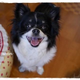 笑顔の可愛い子です!