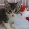 三毛猫&白猫子猫