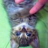 キジトラの子猫ちゃんです♪