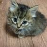 産まれて間もない子猫です、迷子になってました