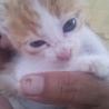 2ヶ月弱の子猫 NO2