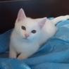 真っ白の仔猫ちゃんです。
