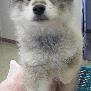 mix♂ 子犬ポテトくん