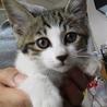 元気印★子猫のひまわりちゃん