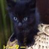 やや長毛の黒猫♂