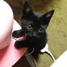 長崎県佐世保市で子猫の里親を探してます!