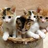 【子猫の里親募集!】三毛猫3匹と茶トラです!