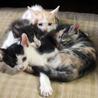 家族になってください!!3姉妹